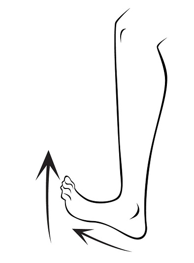 best exercises for ankles fat